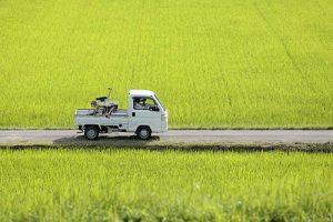 福島県広野町の農道で撮影した写真