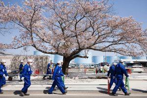 福島第一原子力発電所で撮影した桜と作業員