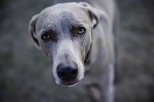 R5とRF24-70を使った写真家によるレビュー-犬の写真